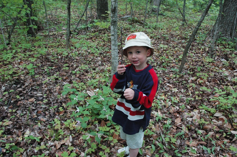 Discovering trilliums